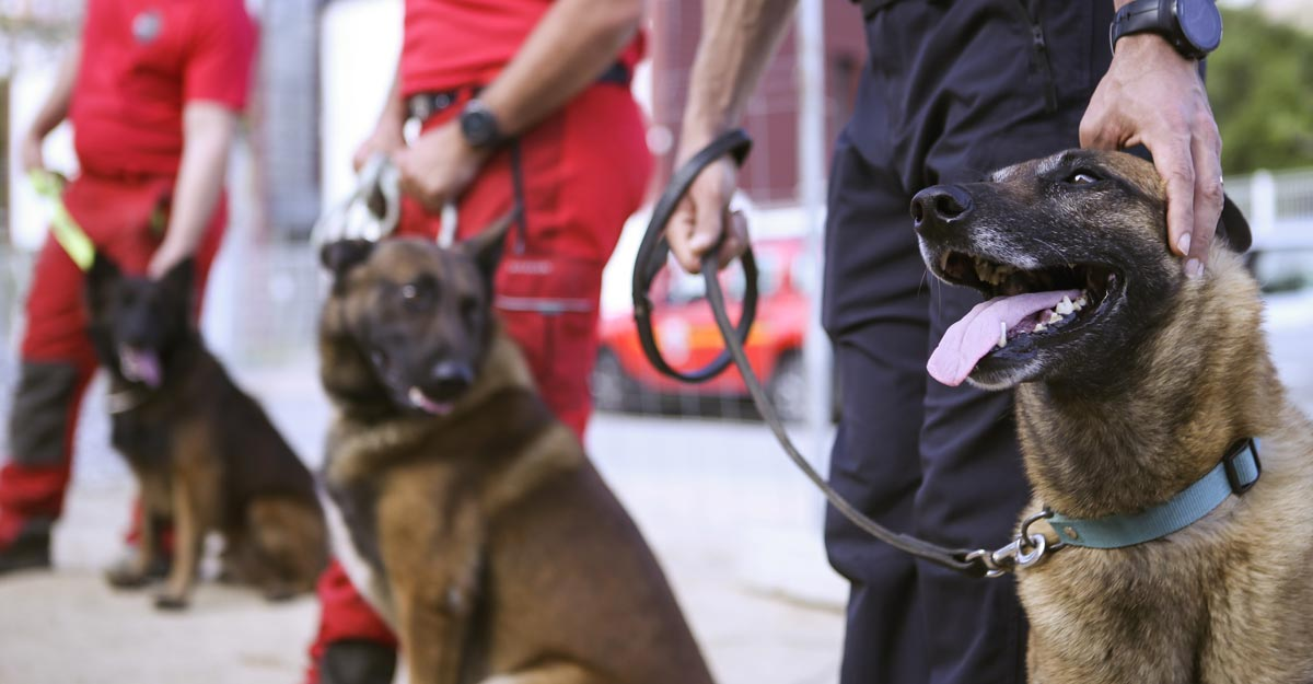 UAE to use sniffer dogs to detect COVID-19 cases in crowd | World ...