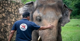 'World's loneliest elephant' okayed to quit zoo for new life