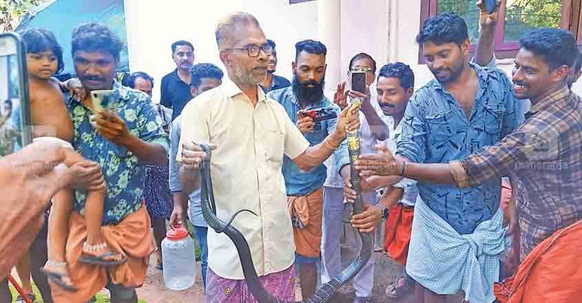 King cobra caught from washing machine at Nilambur house