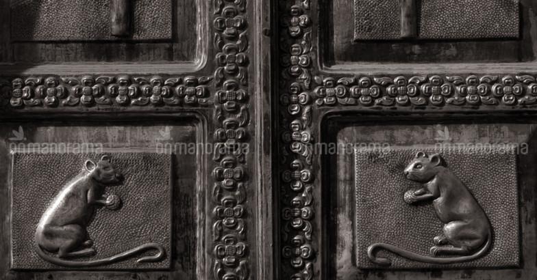 karni-mata-temple8