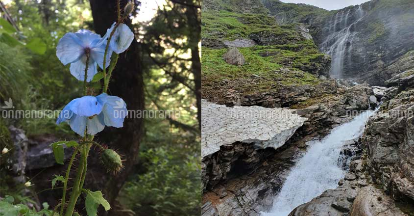 Why you must visit the Valley of Flowers in monsoon