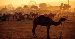 All you need to know about the festivities at Rajasthan's Cattle Fair