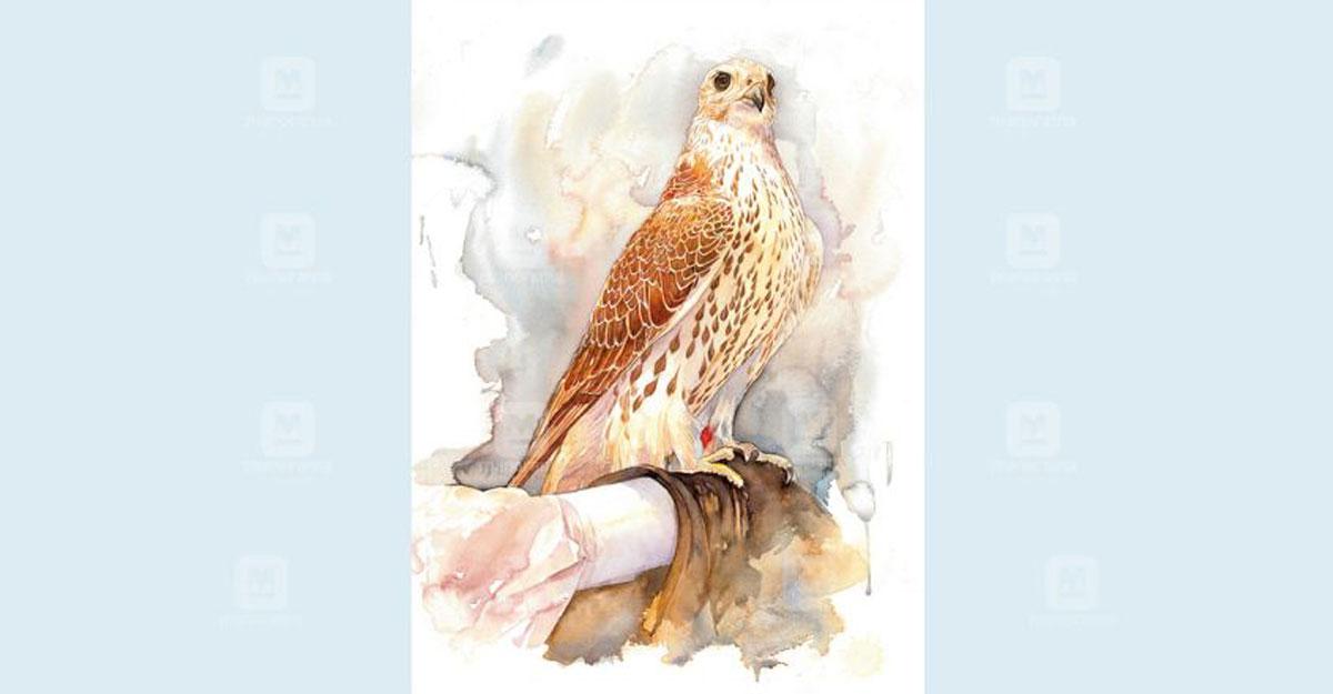doha-falcon