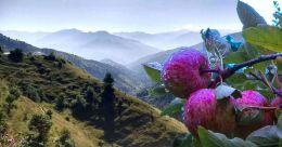 Lush apple farms, mist and snow make Fagu in Himachal Pradesh beautiful