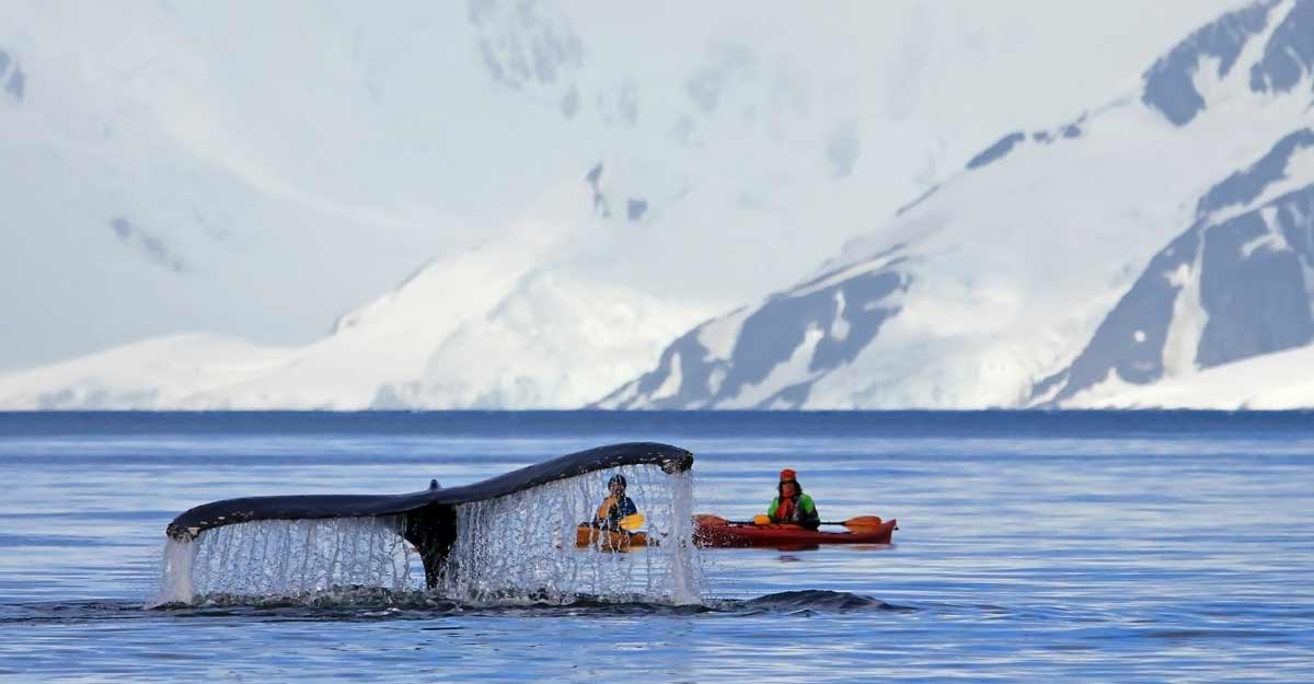 Journey to Antarctica: A complete guide