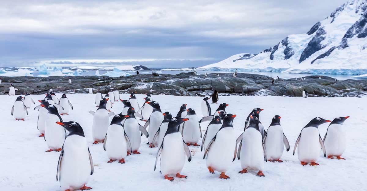 penguins-antarctica