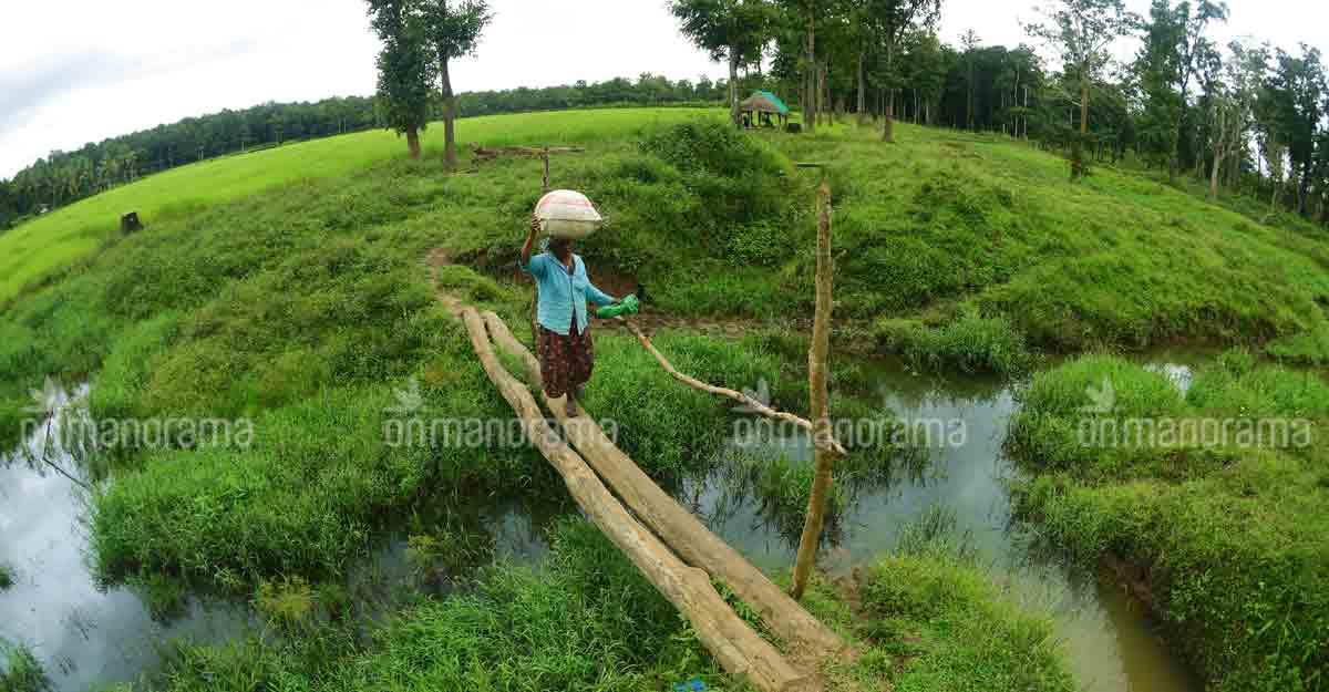 muthanga-field