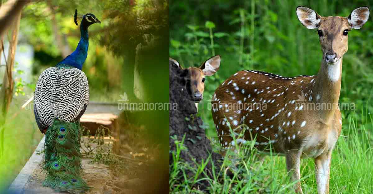 wayanad-animals