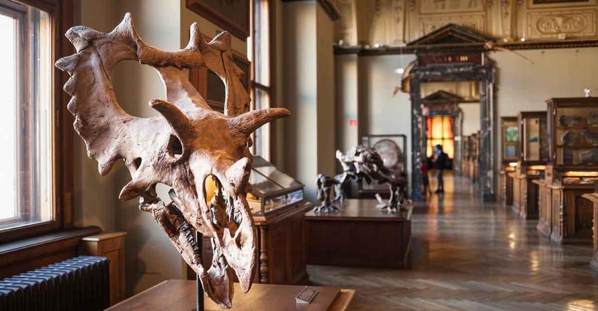 natural-history-museum-vienna