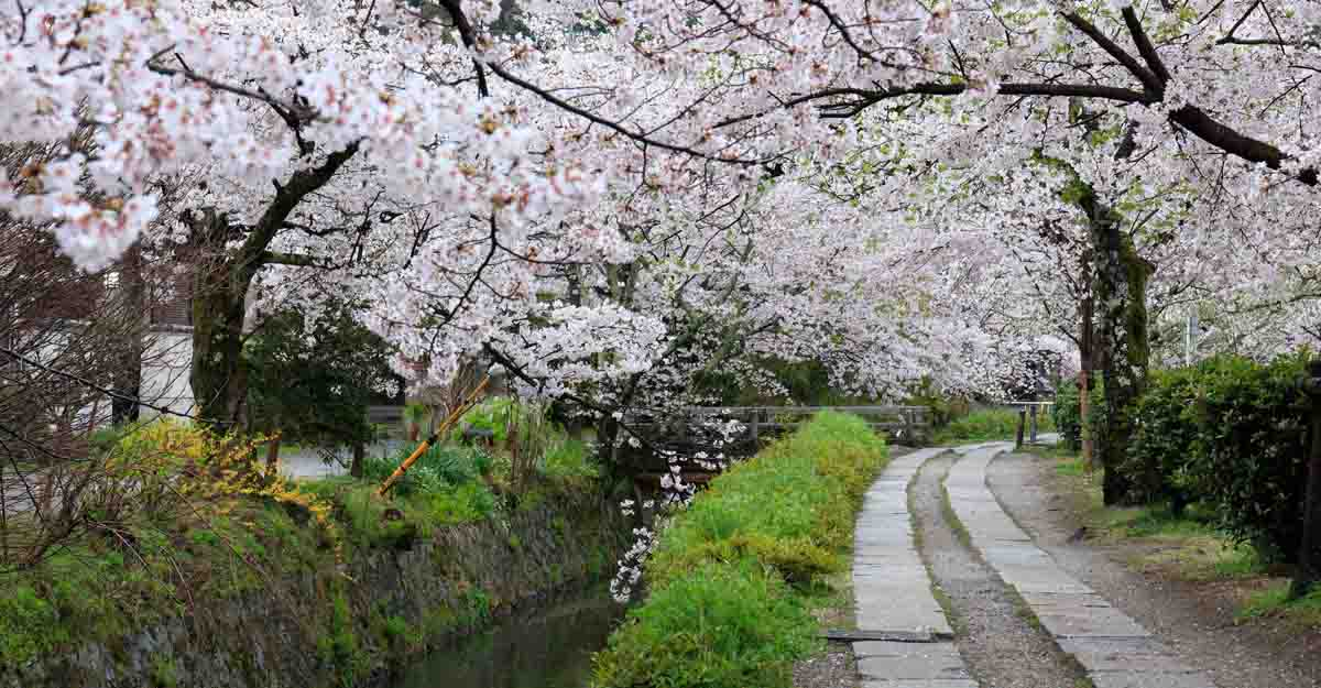 philosopers-path-kyoto-japan-cherry-blossoms