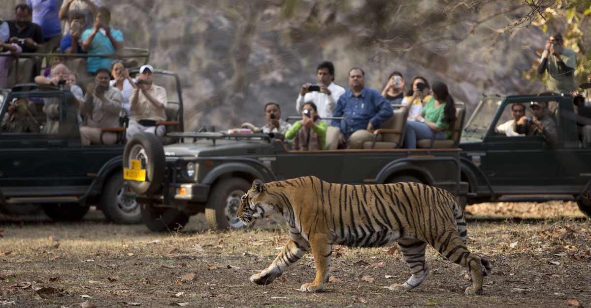 ranthambore-tiger-new