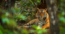 In pursuit of the Bengal tiger in Ranthambore National Park