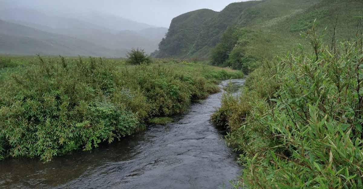 dzukou-valley-7