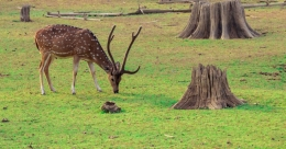 Kabini-Gundlupet route offers a visual feast for travellers