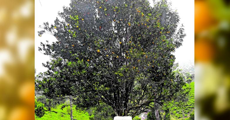Anayirangal Hills