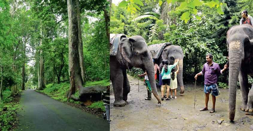 Thekkady: An evergreen attraction   Thekkady   Idukki   Nilgiri tahr    forest   Periyar