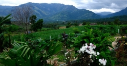 Stay by the sugar cane farm at Masivayal in Idukki