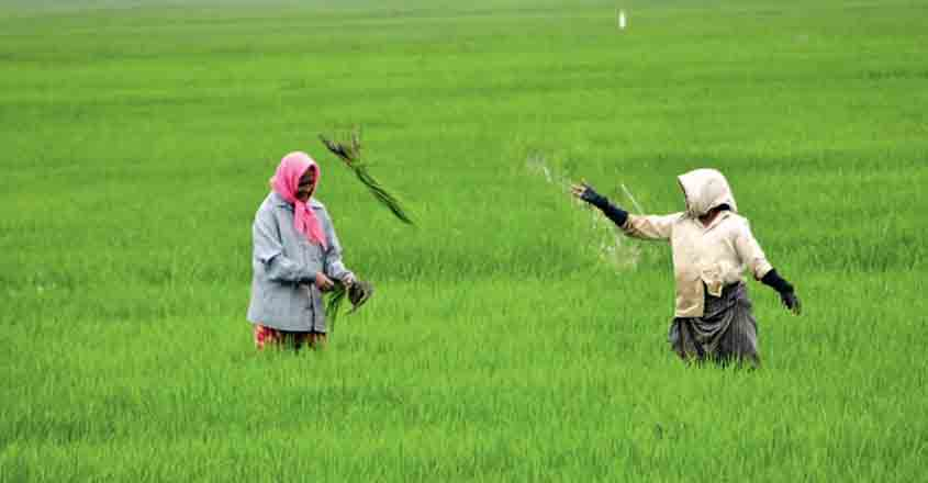 Govt hikes minimum support price for paddy by Rs 53/quintal