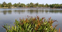 Chathamma Island, a safe haven close to Kochi