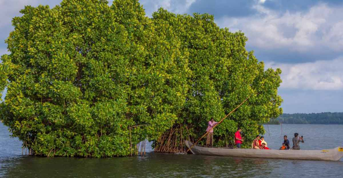 Munroe Island, an ideal spot for a canoe cruise