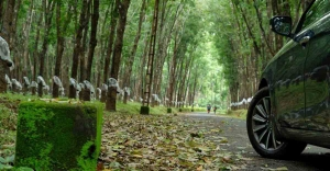 Drive to Mampazhathara through a forest path that Google can't take you
