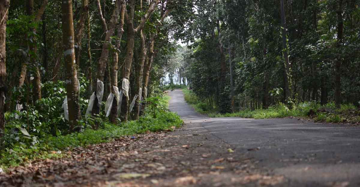Drive to Pampanal Waterfall near Kottayam for a quick getaway