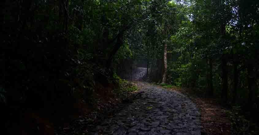 kakkayam-forest