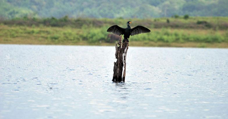 On nature's lap: A getaway to Parambikulam