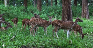 Parambikulam Tiger Reserve in Palakkad never fails to impress