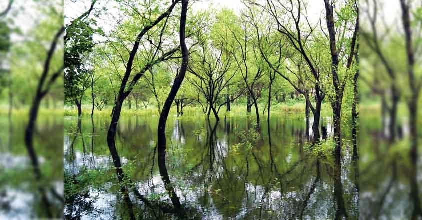 palakkad-mangroves