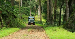 Experience the wild firsthand at Pakuthippalam Forest Lodge