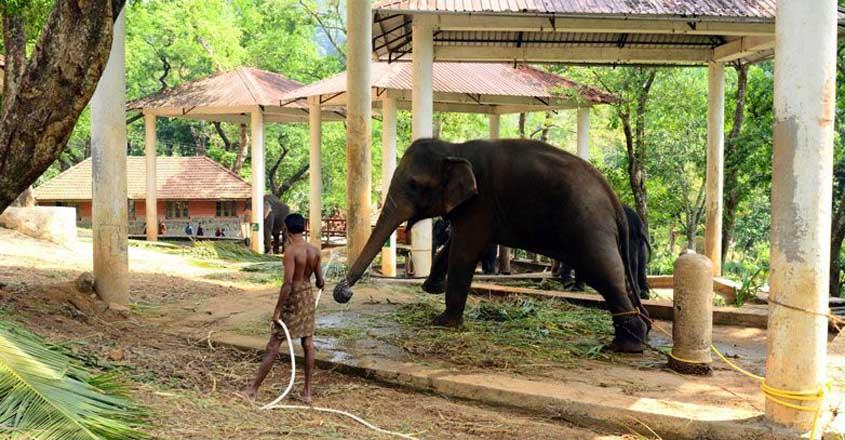 konni--elephant-reserve