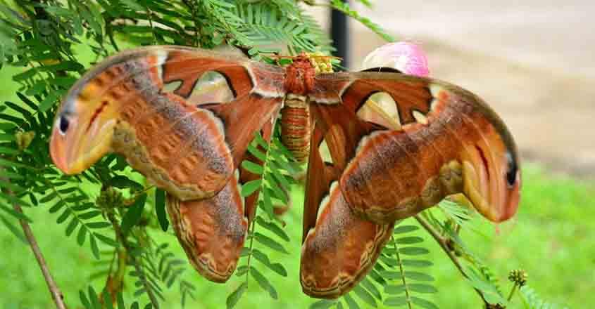 gavi-butterfly