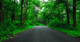 Miyawaki forest project launched in 22 spots by Kerala Tourism