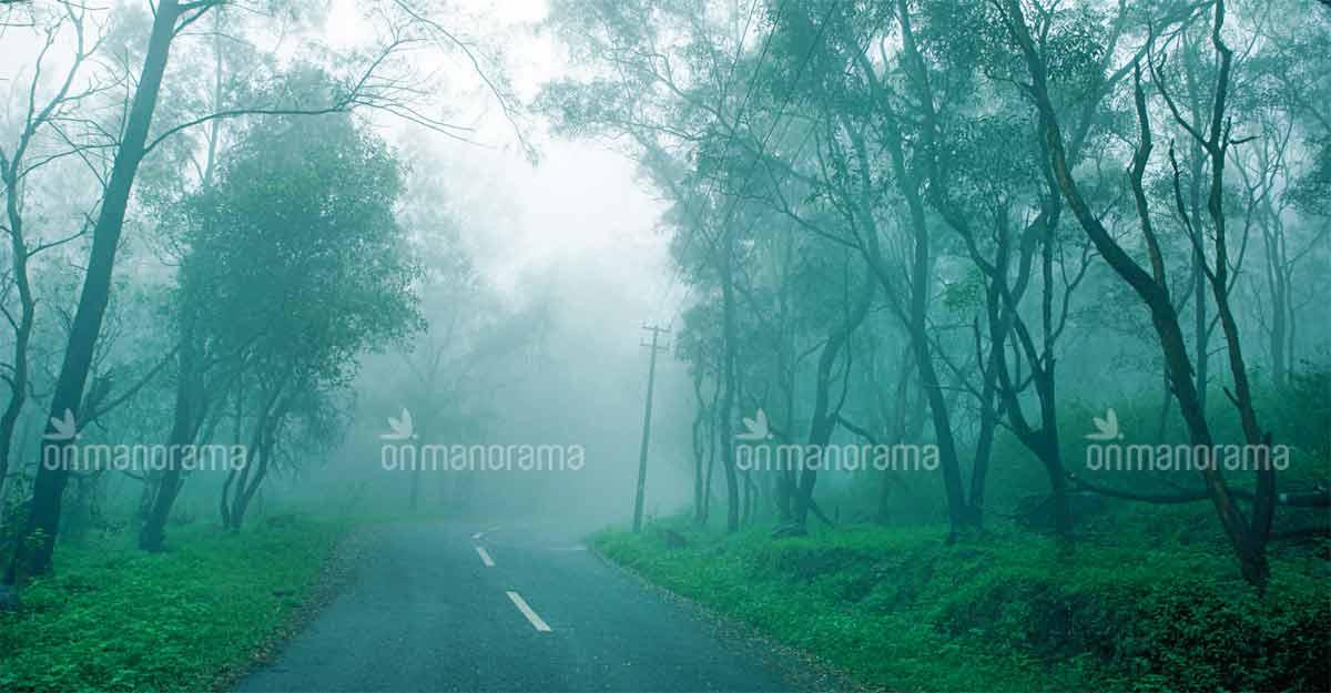 Take a trip to Ponmudi as it turns mesmerizingly beautiful during monsoon