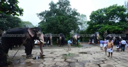 A day in the life of an elephant at Punnathoorkotta during July