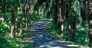 A thrilling bike ride through the scenic Athirappilly road