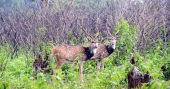 Projects, which don't need environmental clearance need no wildlife clearance