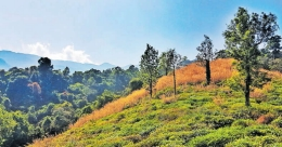 Soak in the irresistible charm of Wayanad's greenery at Pachakkad