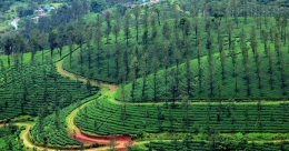 Muneeswaran Hills - the Vagamon of Wayanad