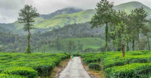 Sentinel Rock stands guard to tea plantations of Mundakai