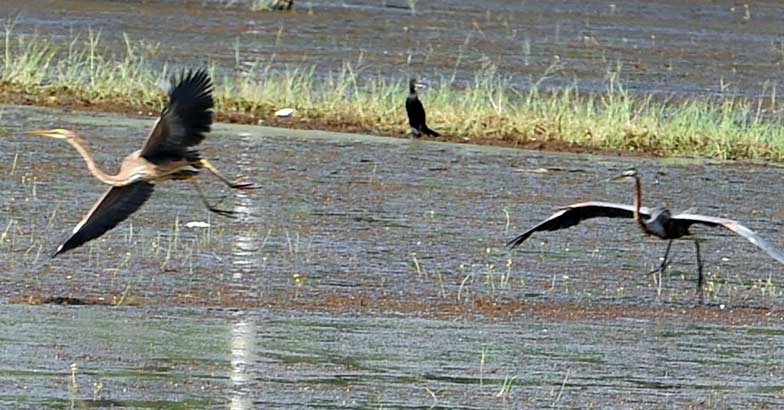 Where in Kerala will you find Pandi Bird Sanctuary