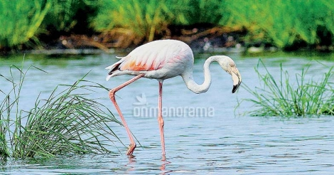 Where to go to watch birds in Ernakulam
