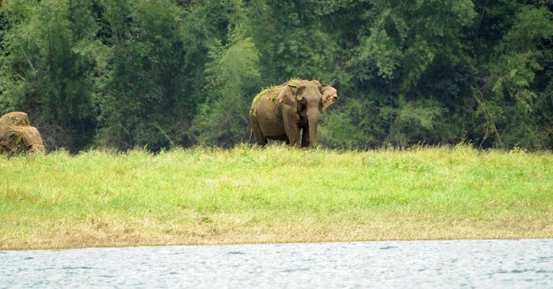 Thekkady's Jungle Book