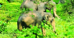 Before you visit Aralam Wildlife Sanctuary