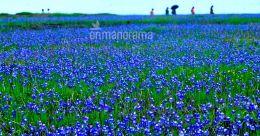 Madayipara: A bloom for every season