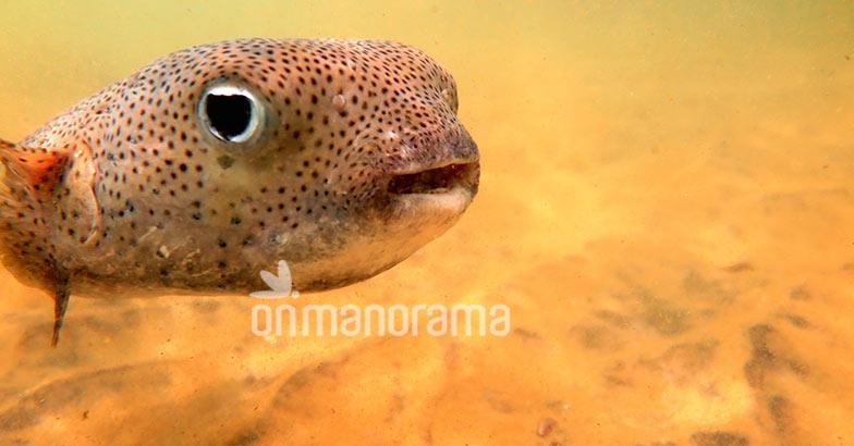 Exploring the life underwater at Kovalam