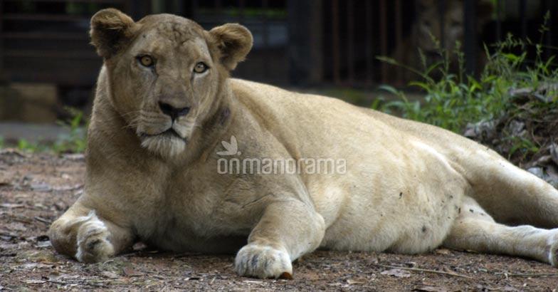 Lion Safari Park