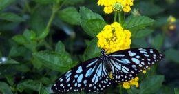 13 quick getaways from Thrissur