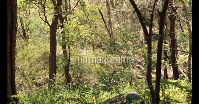 High up in the hills of Charpa, there is a heaven called Kurishumudi peak